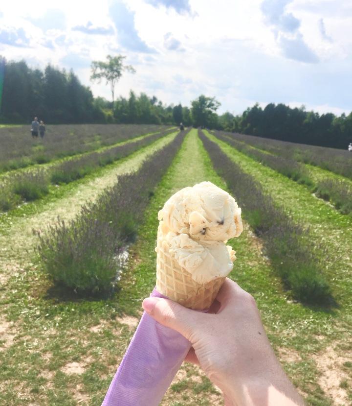 The Lavender Farm + LifeUpdate…