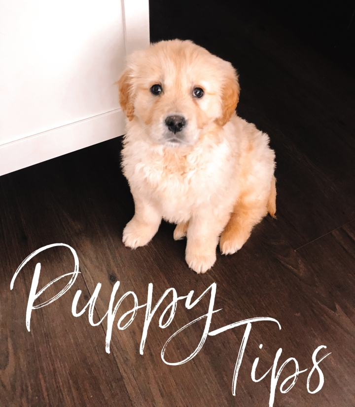 Puppy Tips- I've learnedrecently…
