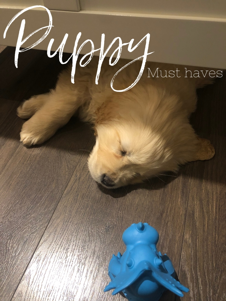 Puppy Essentials